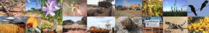 bcn collage
