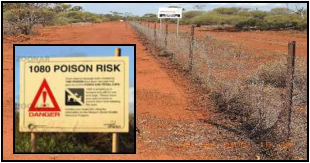 beware poison sign inlayed on background of outback fence