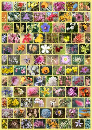 wildflowers print with mosiac of wildflower images
