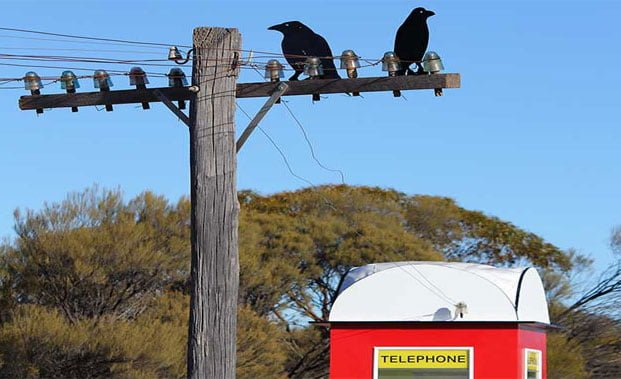 2 crows on a power line next to a phone box in the country