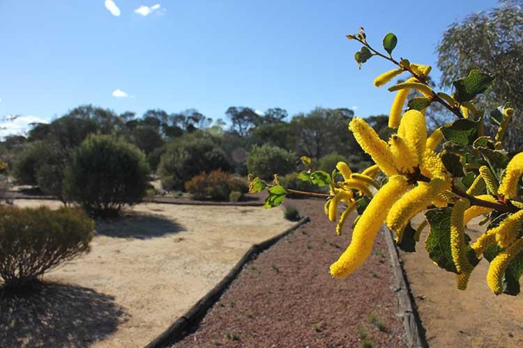 Botanical-Park