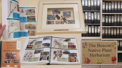 Beacon-Herbarium